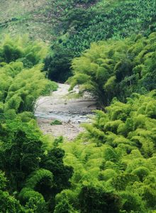 Gadual y río en Córdoba-Quindió