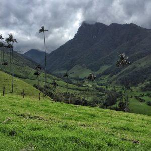 Valle de Cocora en Salento Quindío