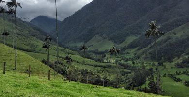 Qué hacer en El Valle de Cocora