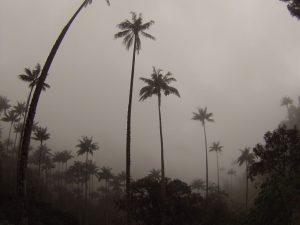 Niebla en el Valle de Cocora