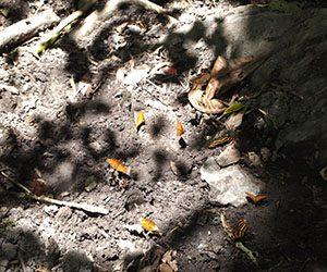 Mariposas en el Valle de Cocora